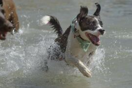 Taking your dog to the beach? Tips to keep him safe, comfortable