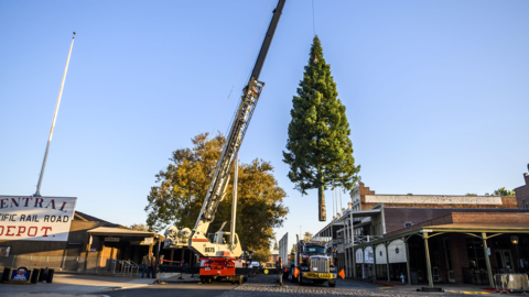 Watch 62-foot Christmas tree get installed in Old Sacramento