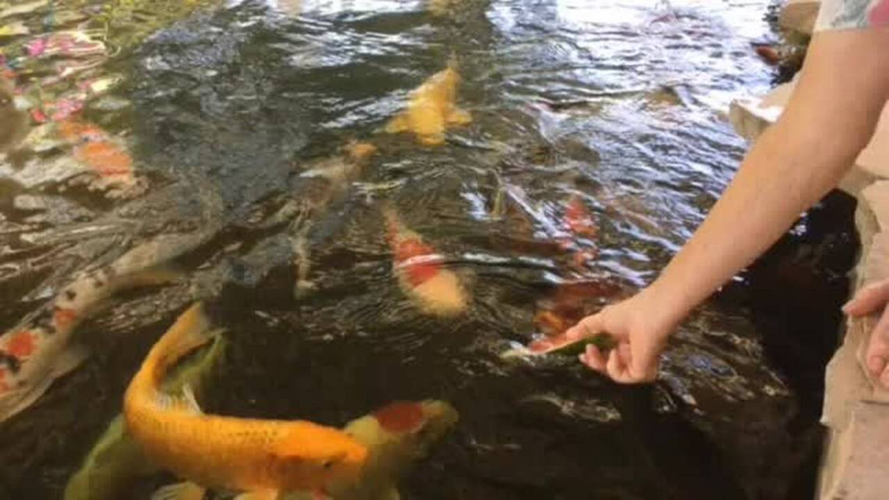 Fishing line: Trout plants continue at Lake Amador | The ...