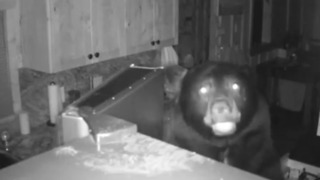 Watch burglar-like bears ransack Lake Tahoe home, leave it a mess