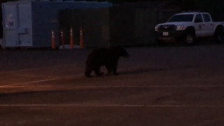 Bears make a special early morning visit to Placer County Sheriff's Office
