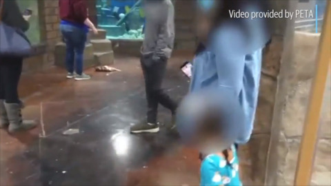 PETA video shows fish flopping on floor of Folsom's SeaQuest aquarium after jumping out of tank