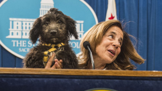 California's new deputy first dog makes first press conference appearance