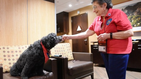 Tassy the therapy dog makes the rounds at a Modesto hospital