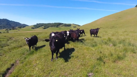 Got wildfire fuel around your rural home? Use website to find livestock to graze it