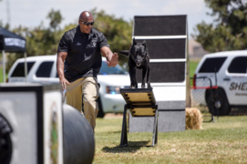 See police dogs run and jump through agility course
