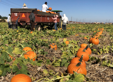That big orange orb on your porch? It might have come from this Manteca-area farm