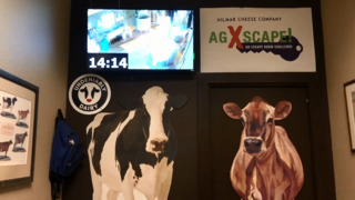 Help save the cows in the new escape room at Hilmar Cheese