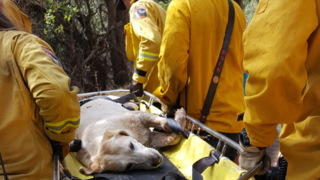 Sonora firefighters come to the rescue for 12-year-old lab stuck at bottom of ravine
