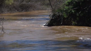 Water in Modesto's Tuolumne River and Dry Creek at elevated levels