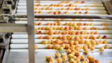 Biden's buy-American order could put more Modesto cannery peaches in school lunches