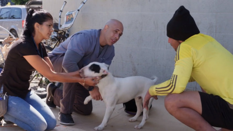 'Street Vet' trailer: Modesto veterinarian works with homeless and their pets