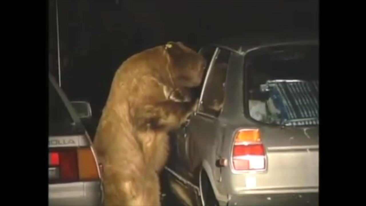 Too many bears are being killed in Yosemite. Is it time to ban cars?