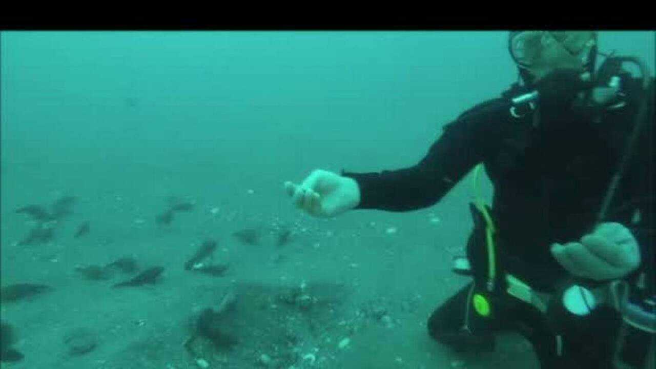 Divers video themselves discovering gold from shipwreck off NC coast - Charlotte Observer Divers video themselves discovering gold from shipwreck off NC coast - 웹