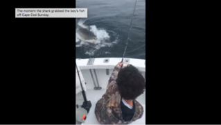 Boy's big fishing catch is grabbed by a great white shark