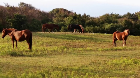 Taking care of the Corolla Wild Horses