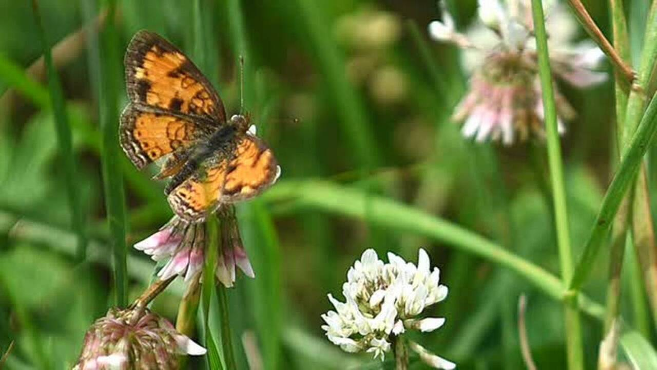 The butterfly effect: How the 'magic of the monarch' is inspiring conservation in NC