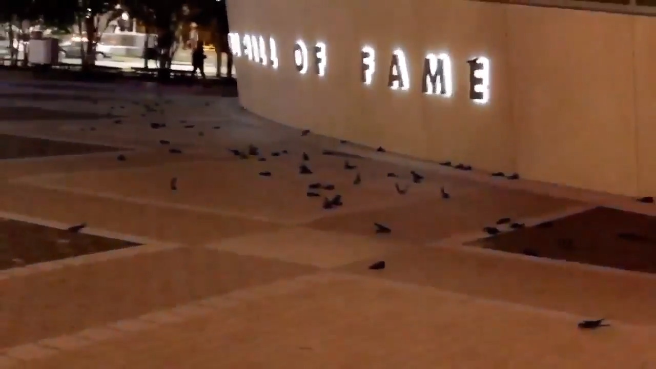 What became of the 310 birds that crashed into NASCAR Hall of Fame? Here's the latest