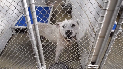 Ready for a dog? Mecklenburg shelter is crowded and officials hope you'll adopt