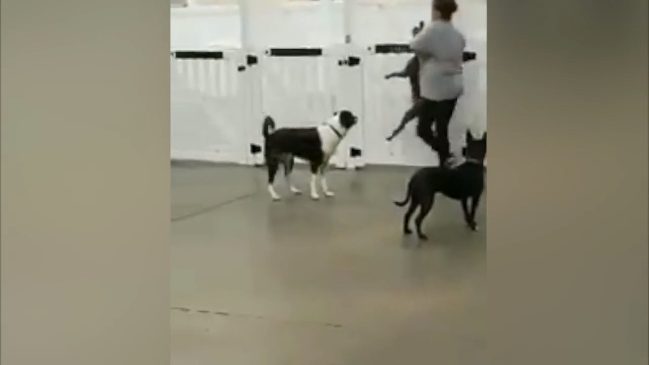 Police close probe of Charlotte Dog Resort incident without filing charges