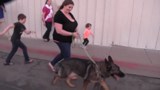 Dog reunited with family after being shipped to Japan by airline