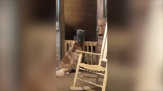Horse and golden retriever form bond at rescue shelter