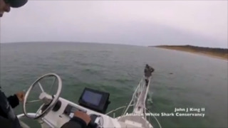 Shark jumps out of water and almost bites researcher