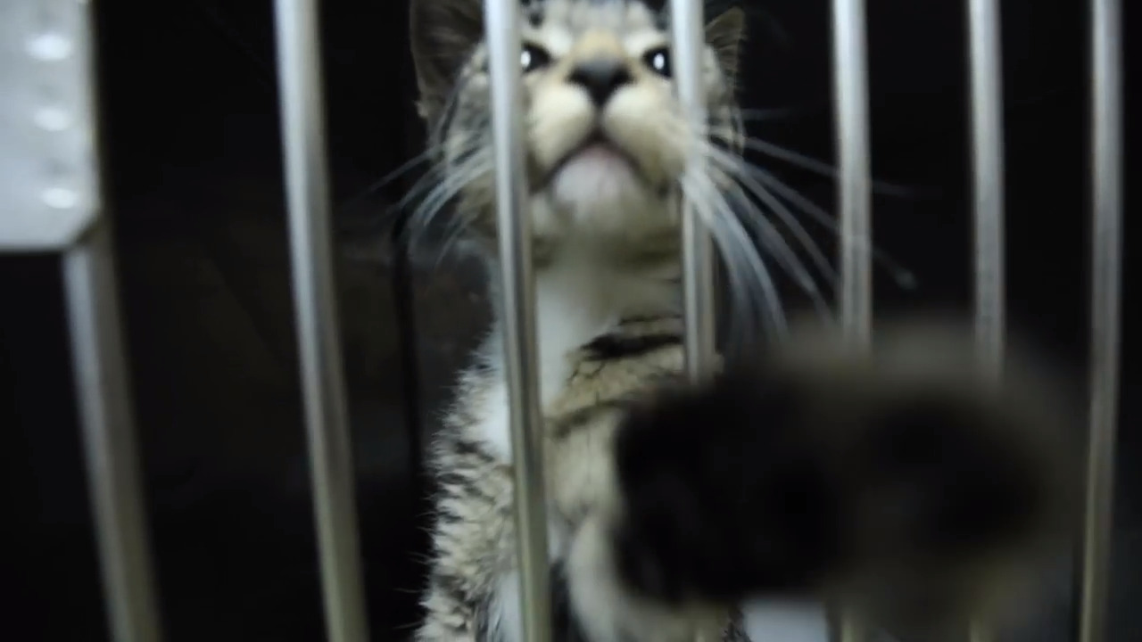 Fewer cats and dogs are being killed at NC animal shelters