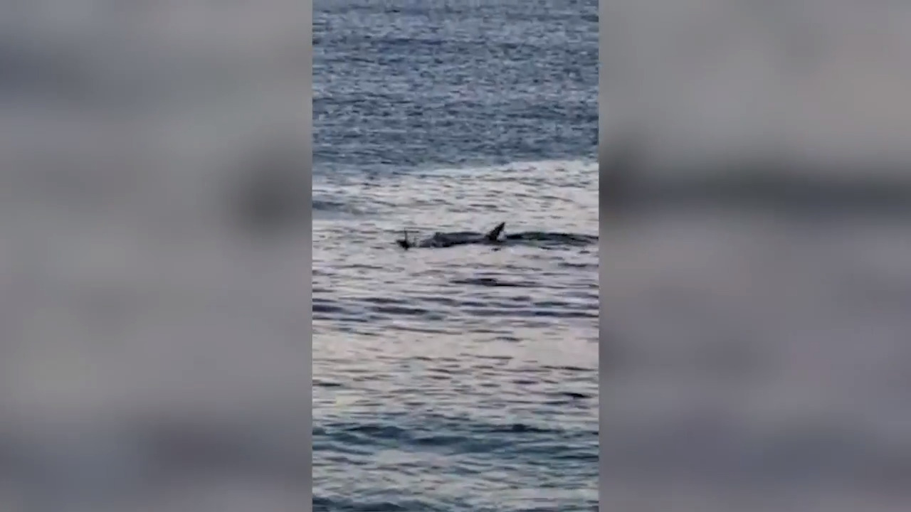 Pilot records video after crash into Pacific Ocean. 'Hopefully someone comes'