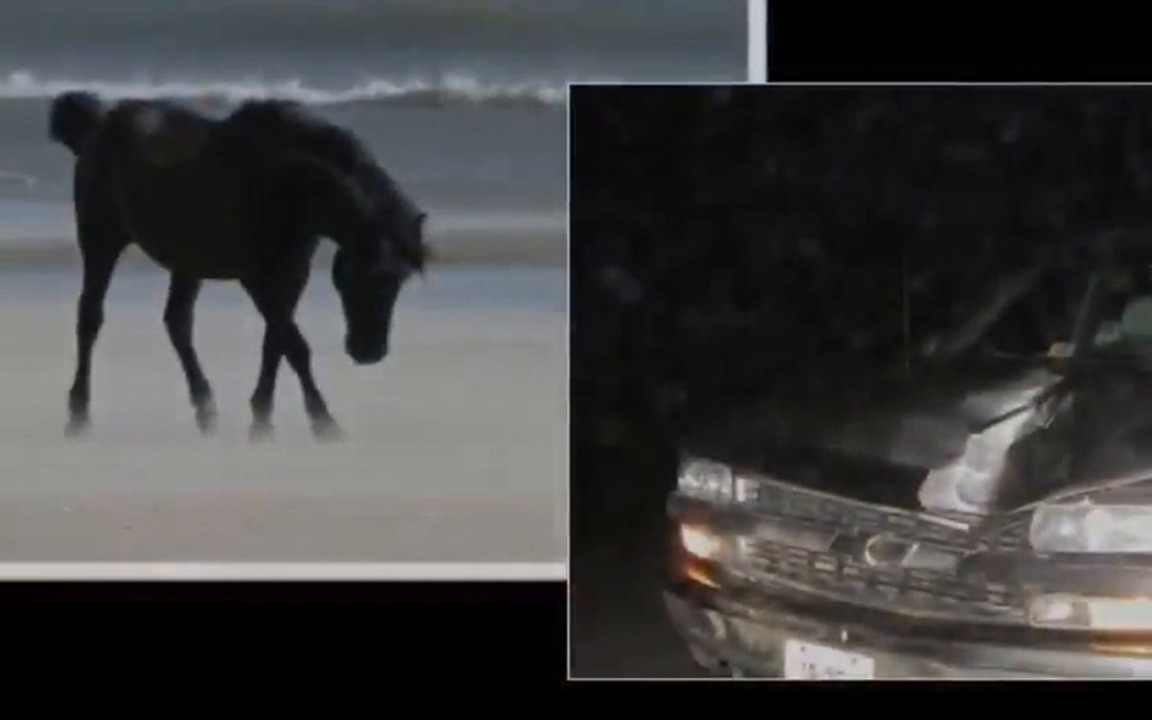 Outer Banks wild horse put down after getting tangled in barbed wire, NC group says
