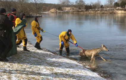 Firefighters rescue deer that fell through ice at Lake Olathe