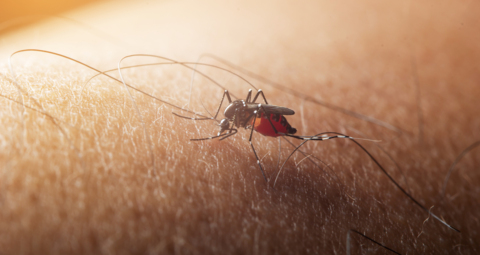 Arlington striving to be mosquito-free this summer. And here's how you can help also