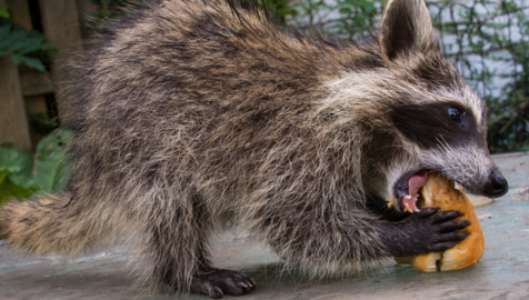 Rabies: 'the most deadly virus on the planet'
