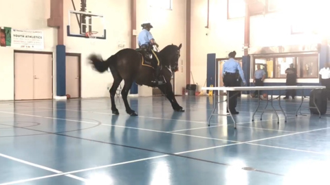 Now kick, now kick: Watch this police horse in Louisiana do the 'Cupid Shuffle'