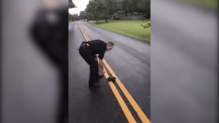 A turtle crossing the road escapes Williamson County Sheriff