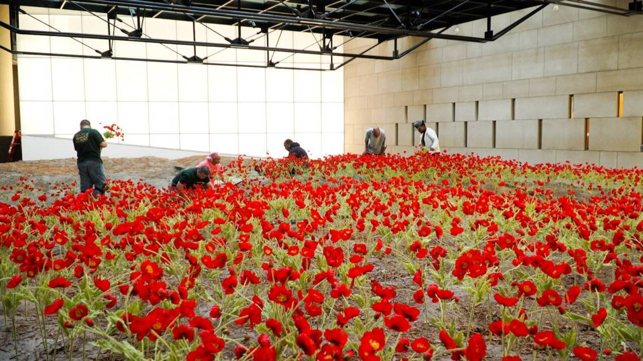 New Poppy Field Logo At National World War I Museum In Kansas City