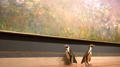Do you get the impression that penguins from the Kansas City Zoo like art?