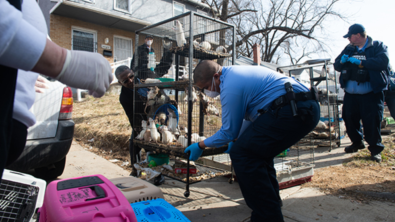 Couple charged in one of KC's worst pet hoarding cases; dozens of animals adopted