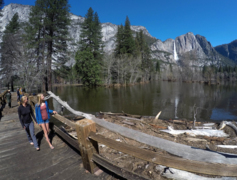 Yosemite Valley flood waters recede, but Merced River and waterfalls rage