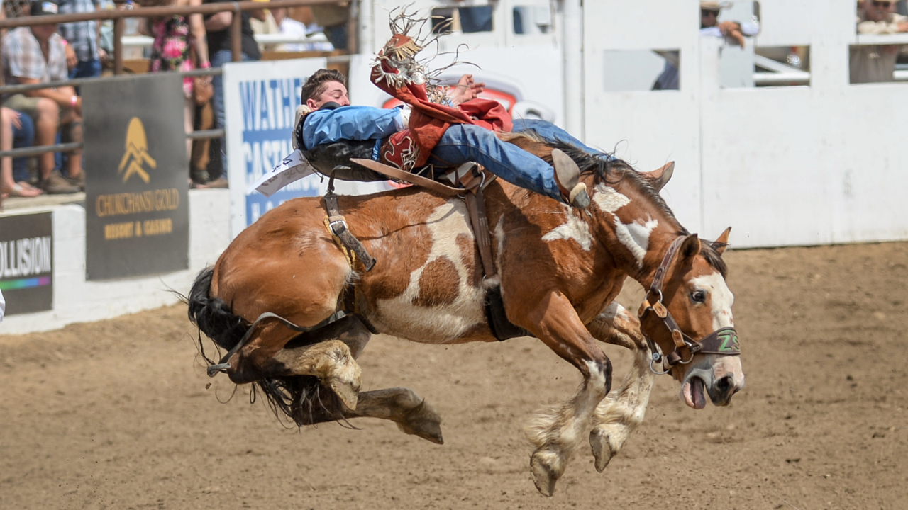 Mutton Busting Bareback Riding And Team Roping Among The