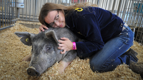 Big Fresno Fair: Bond strong between FFA member and her pig