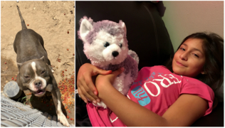 Fresno mom recalls pit bull attacking her daughter