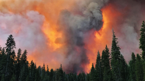 To limit future blazes in California forests, selective logging must occur