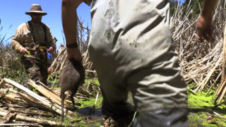 Large rodents invading the San Joaquin Valley