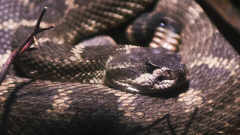 If you can, avoid messing with rattlesnakes. Here are some scary stories to drive home the point