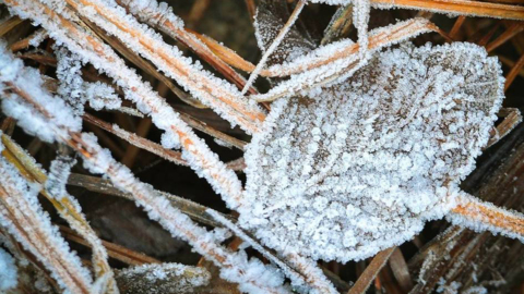Ready for frost? There's a chance for it in central North Carolina this week