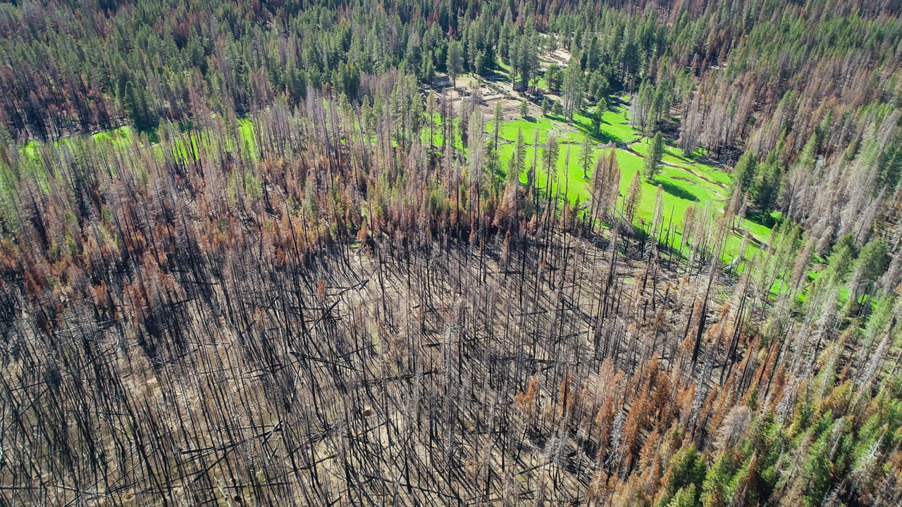 Sierra 'oasis' surrounded by Creek Fire burn has a message: We all failed the forest