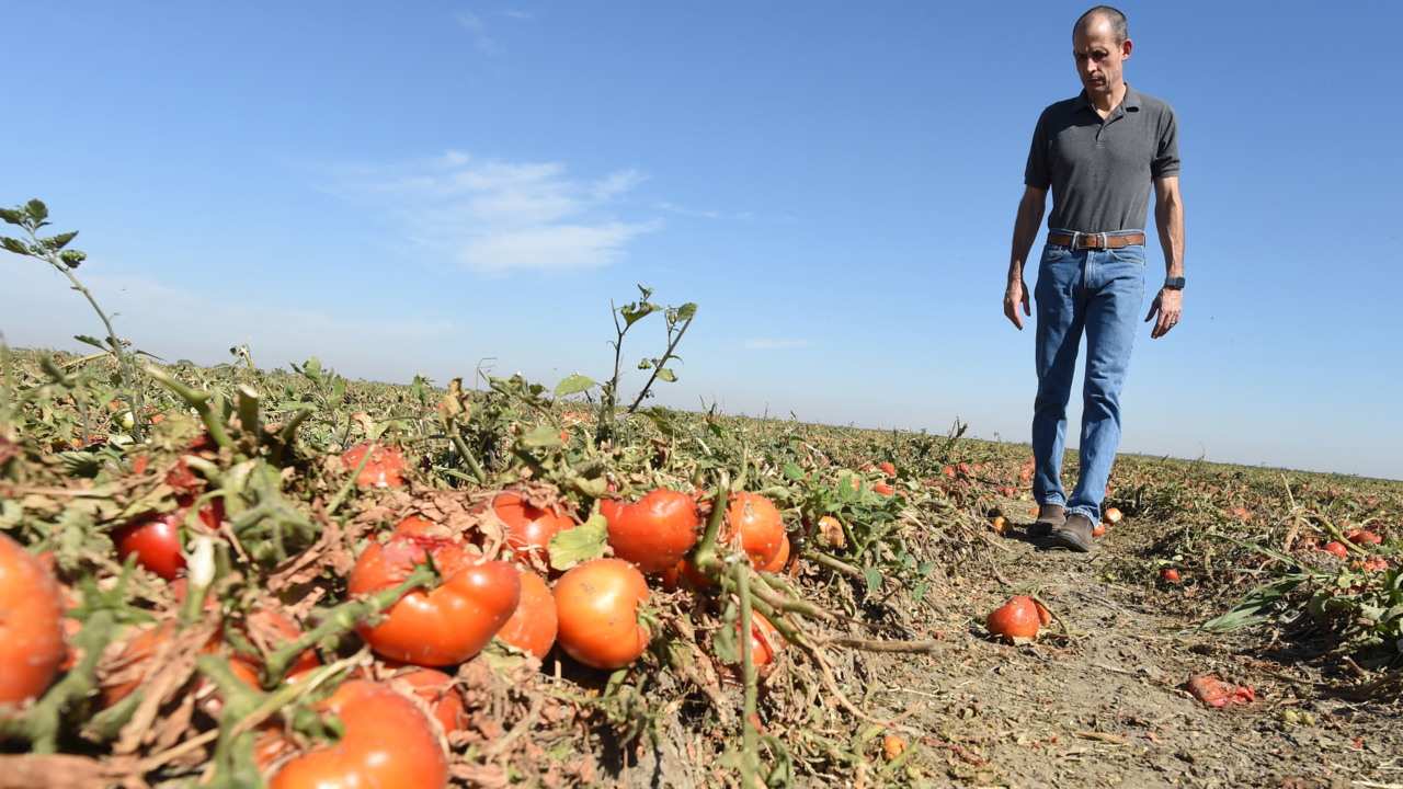 California families at risk for hunger – while a third of crops left to rot on farms