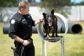 New law would make it a mandatory felony for intentionally killing or seriously injuring a police dog or horse