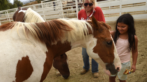 Permanent markers and borrowed trailers: How hundreds of horses, cows escaped Creek Fire